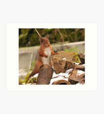 red squirrel  I must get on with my rockery. Art Print