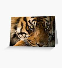 Eye of the  Sumatran Tiger Greeting Card