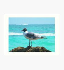 Carribean Gull Art Print