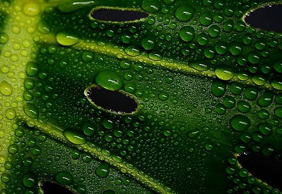 Green by Ingrid Beddoes