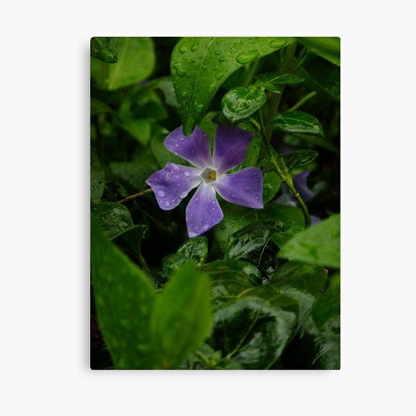 April shower, April flower Canvas Print