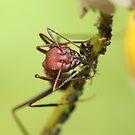 Sheepman Ant by VladimirFloyd