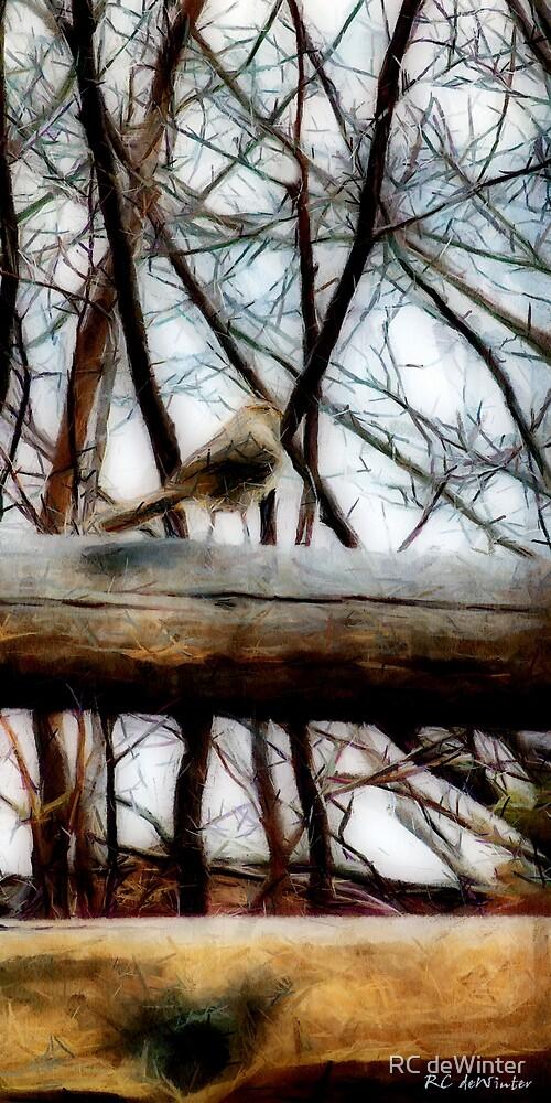 Fat Sparrow, Fat Fence by RC deWinter