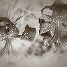 Silver Tones by DAntas
