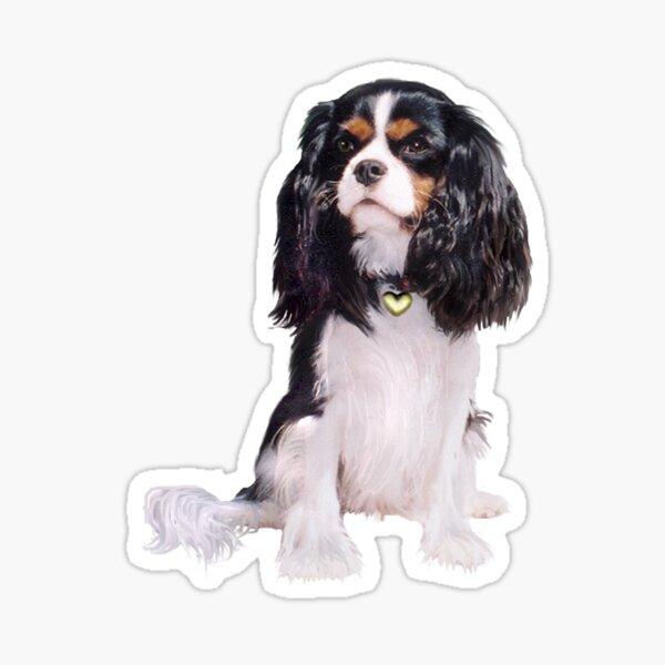 Cavalier King Charles Spaniel - Tri Color (B) Sticker