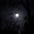 Moonlight by Corkle