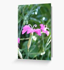 Pink Flower with Antennae Greeting Card