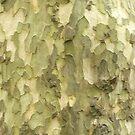 Tree Detail by Joan Wild