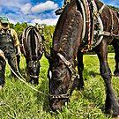 Working Horses by Deri Dority