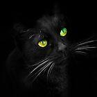 Kitten in the dark by missmoneypenny