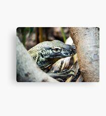 Baby Komodo Dragon Canvas Print