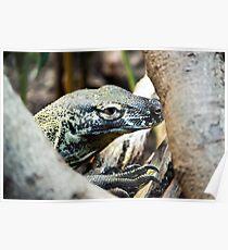 Baby Komodo Dragon Poster