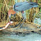 THE GOLIATH HERON AND THE TIGER FISH 2 by Magriet Meintjes