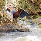 THE GOLIATH HERON AND THE TIGER FISH 4 by Magriet Meintjes