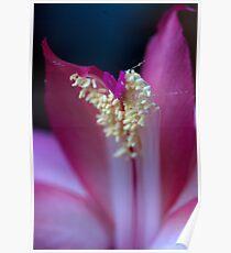 Zygocactus Flower Poster