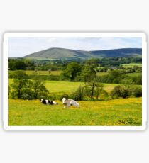 Cows in the Buttercups Sticker
