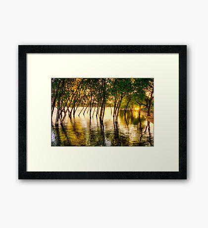 Tree Flood Framed Print