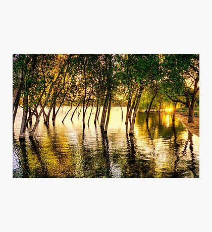 Tree Flood Photographic Print