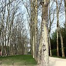 Some of the Grounds of the Palace Versailles by blindskunk