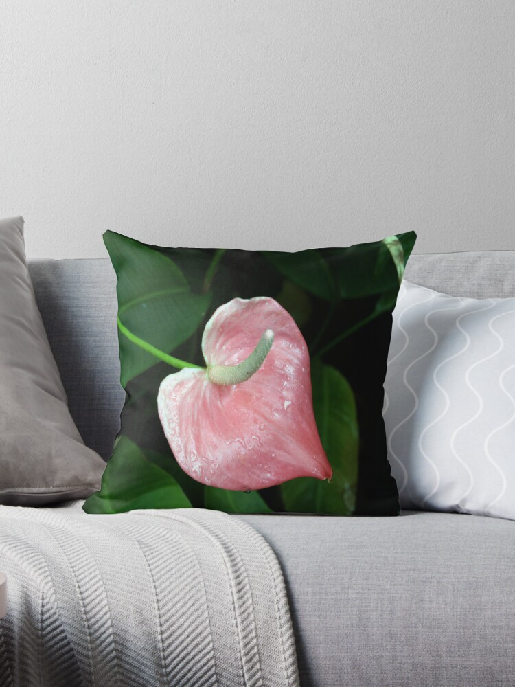 Pink Lilly by Grantley