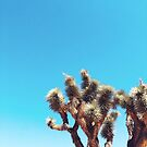 The Joshua Tree  by DivvyMag