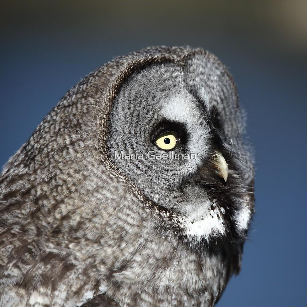 Great Grey Owl by Maria Gaellman