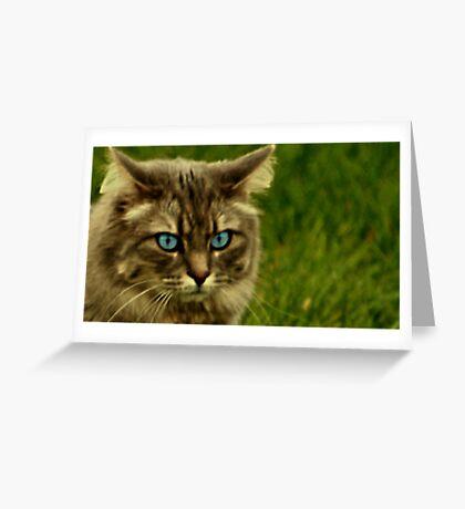 RunAway cat Part 3 Greeting Card