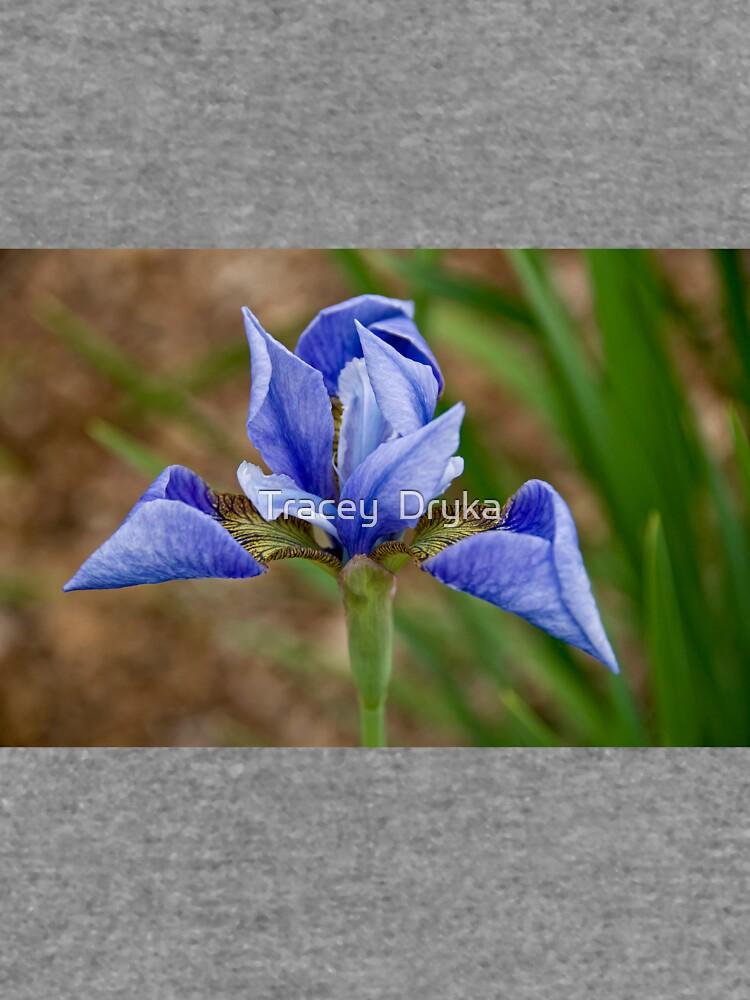 Iris von Destined2see