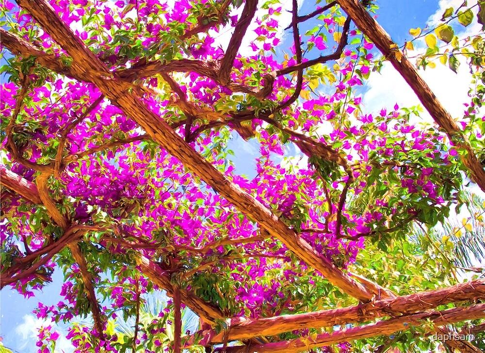 Positano's Purple Bougainvillaes Trellis by daphsam