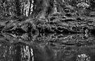 Root by Nigel Bangert