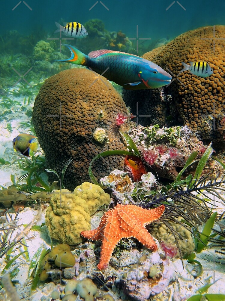 Underwater seabed with coral fish and a starfish by Dam - www.seaphotoart.com