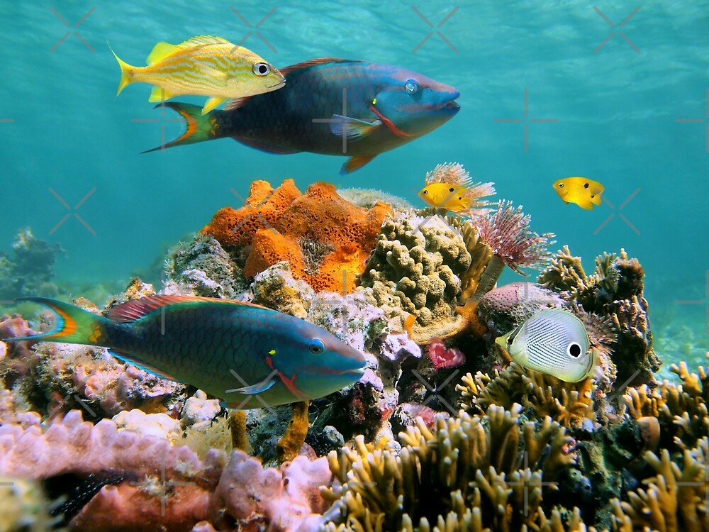 Colorful tropical fish and marine life underwater by Dam - www.seaphotoart.com