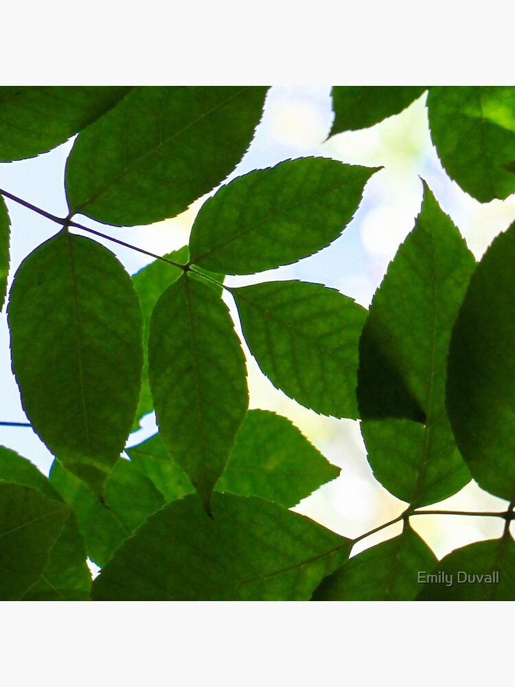 Natural Patterns  by PeaceAndBeauty