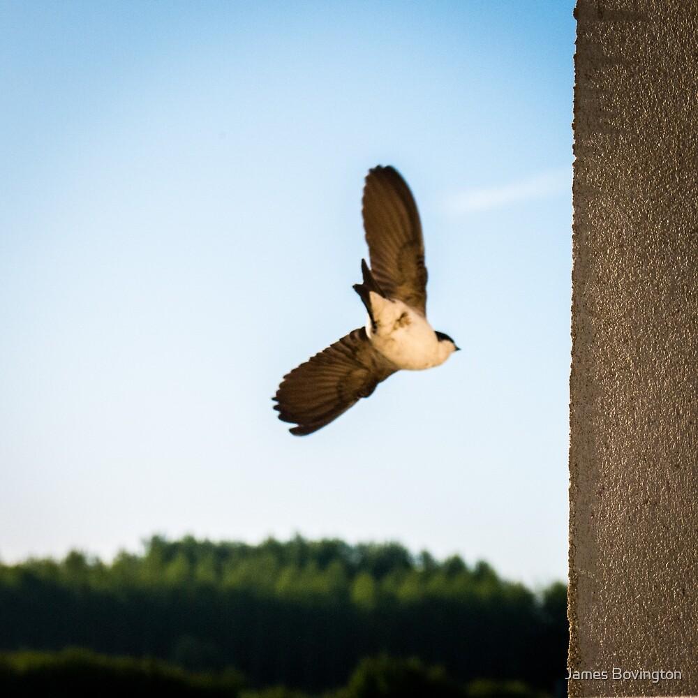 In Flight by James Bovington