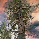 Tree As Lovely As a Poem ! by Nancy Richard