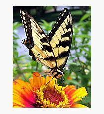 Butterfly Breakfast Photographic Print