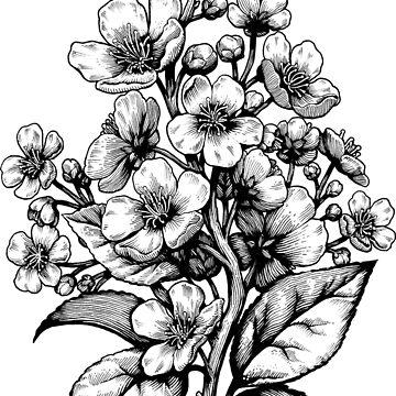 Kirschblüte botanisch von medusadollmaker