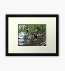 Floating Log- Willow Lake Framed Print