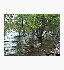 Floating Log- Willow Lake Photographic Print