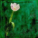 Tulip by friendlydragon