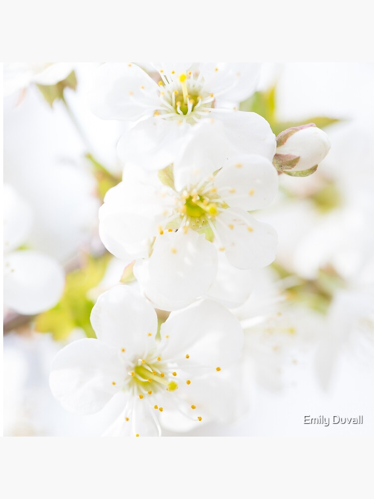 Ethereal Blossoms by PeaceAndBeauty