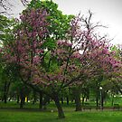 April morning in the park by Maria1606