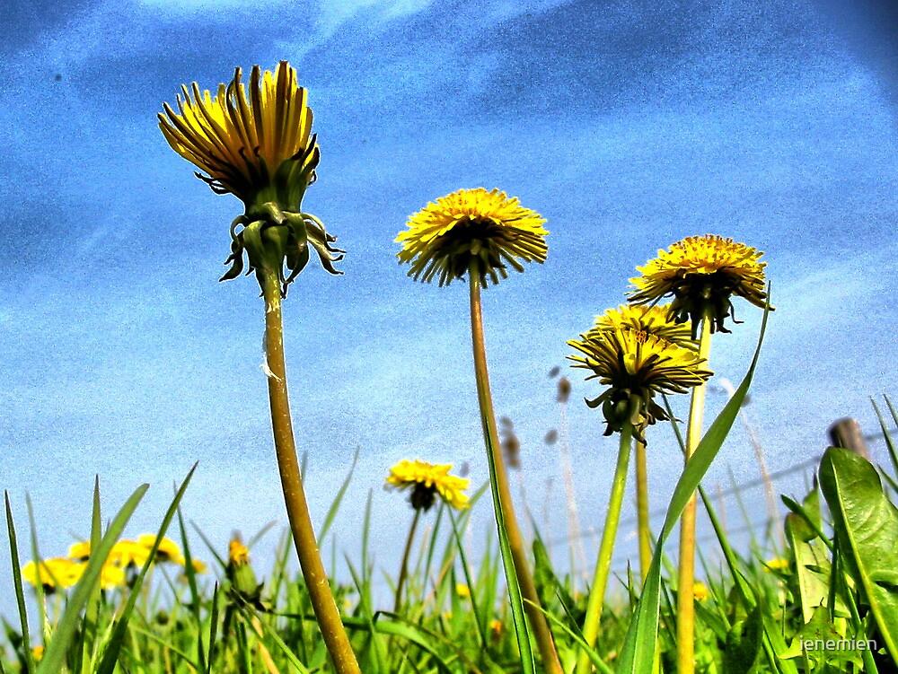 Dandelions in the Sky by ienemien
