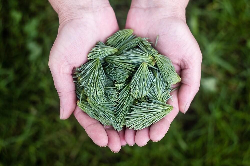 Pine Green, Spine Clean by Wonder Arts
