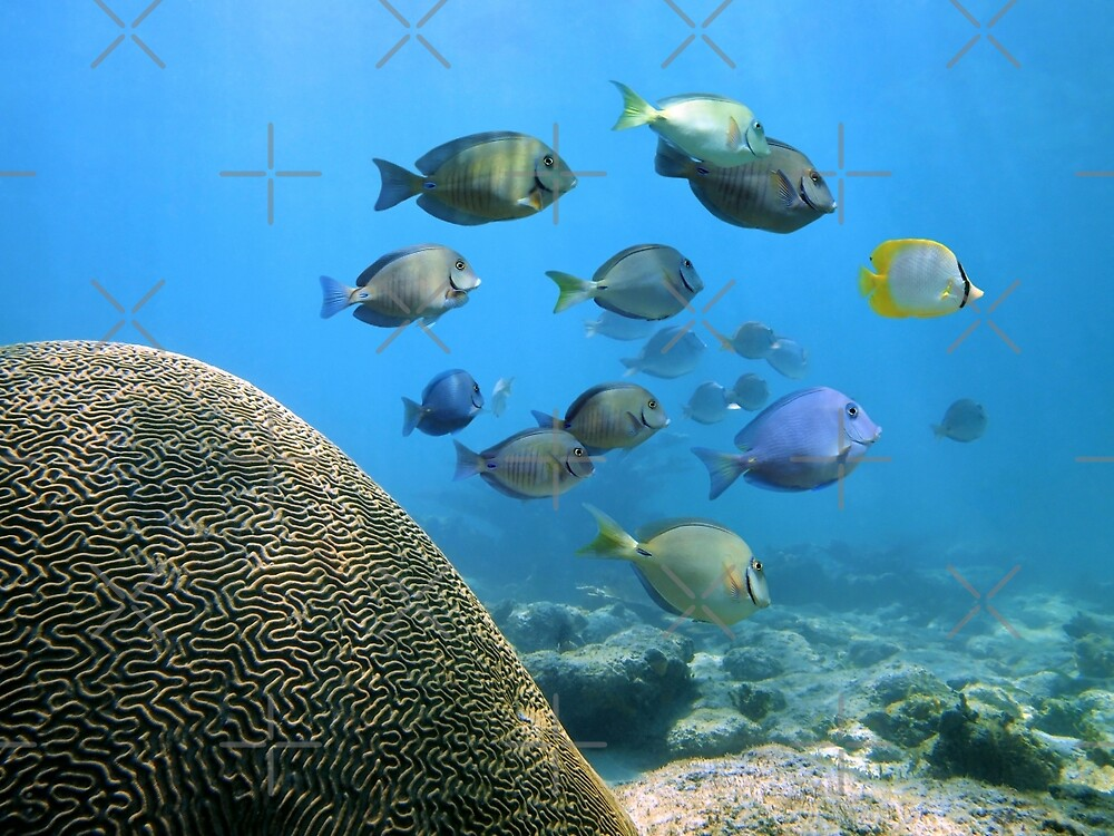 School of reef fish by Dam - www.seaphotoart.com