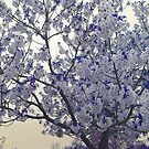 Spring Flourish by Anivad - Davina Nicholas