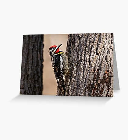 Yellow Bellied Sap-Sucker - Ottawa, Ontario Greeting Card