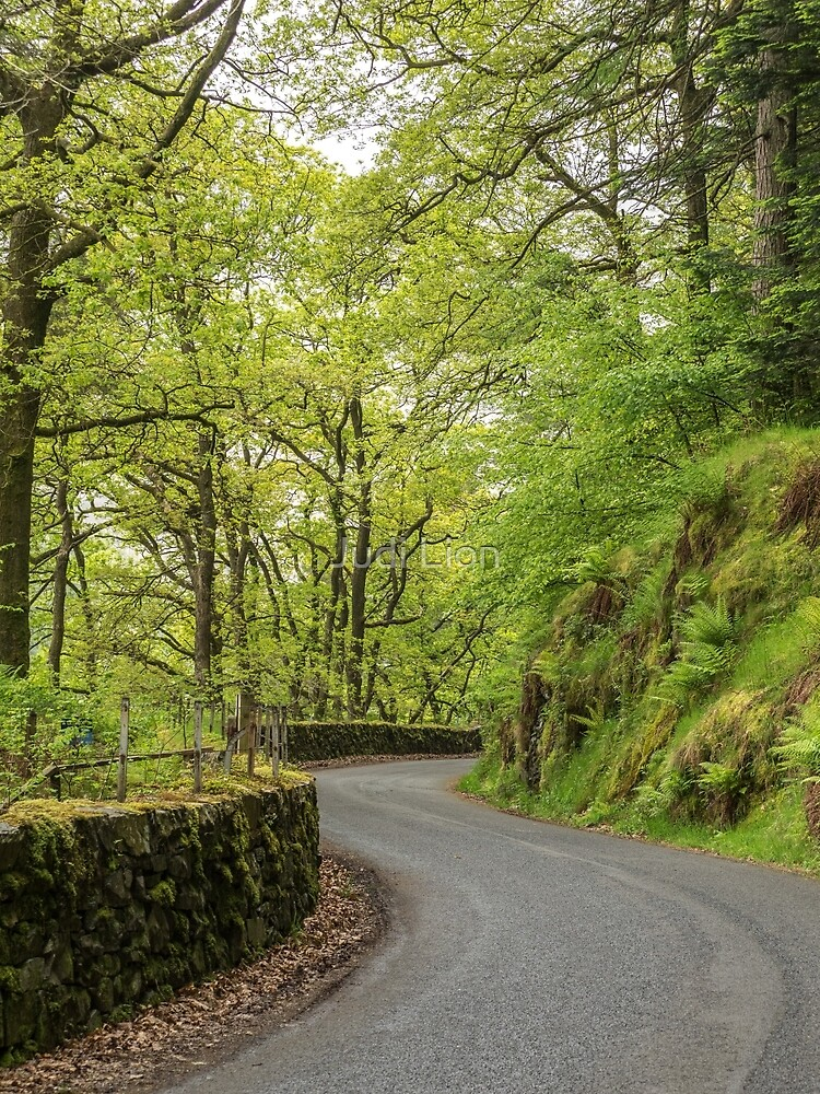 The winding road by Judi Lion