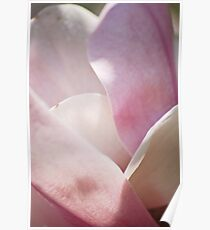 Magnolia Pedals of Spring Poster