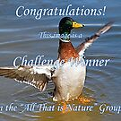 All That is Nature Challenge Winner Banner by Grace Anthony Zemsky